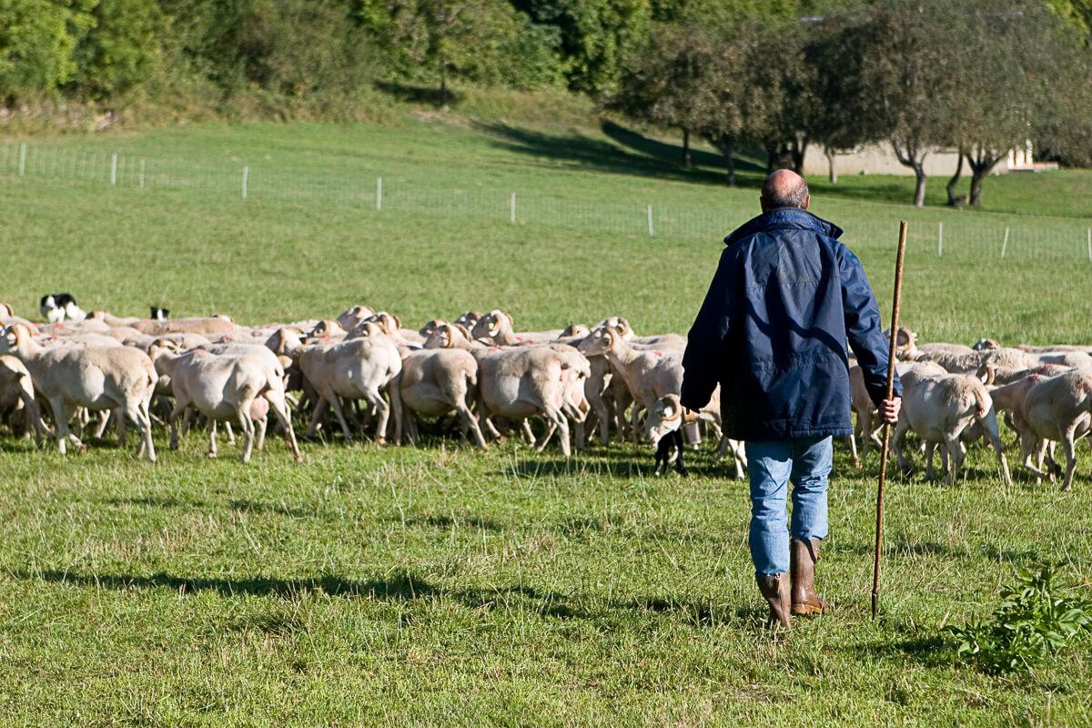 Pastoralisme en vallée du Louron